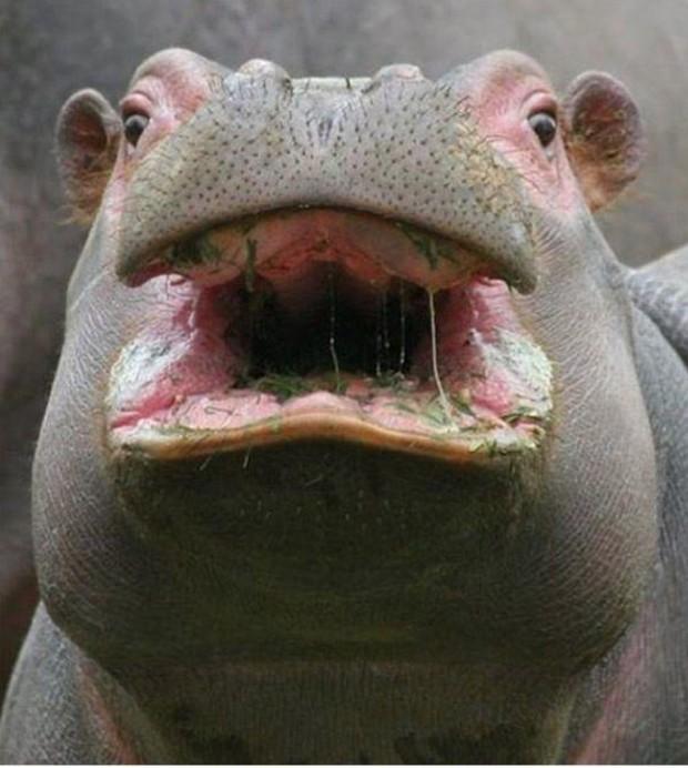animalfaces12 image