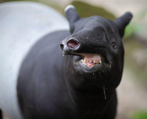 animalfaces56 image
