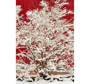 TALK WINTER burian RED  0342 image