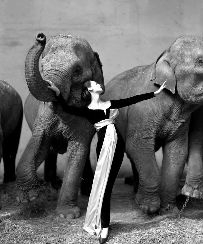richard avedon dovima with elephants christies image