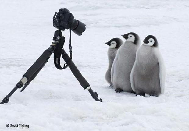 penguines 1 image