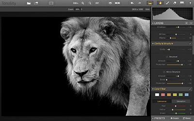 Tonality-GUI-Lion image
