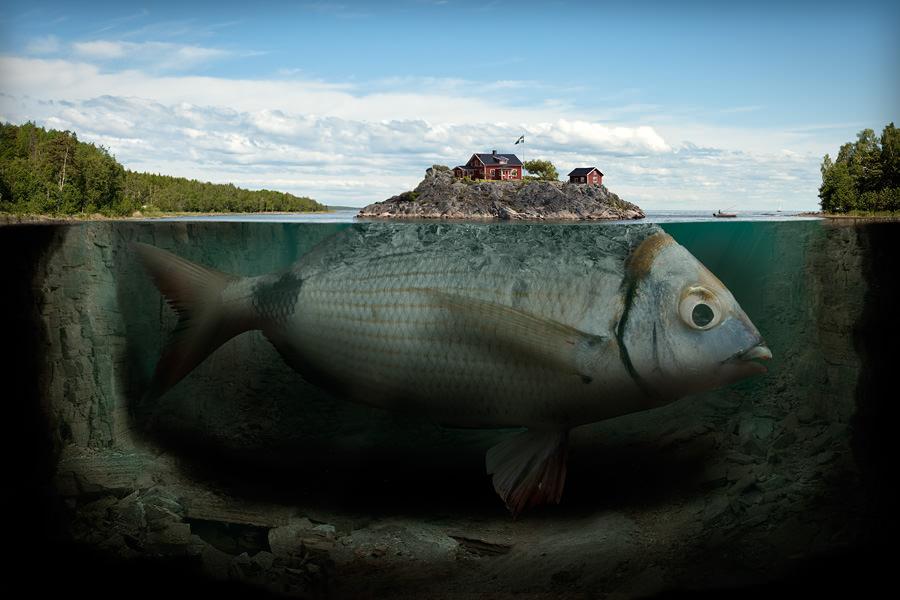 fisk image