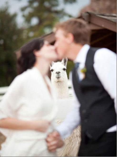 You have to admit, the photo bombing lama is absolutely charming. image