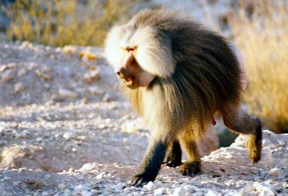 monkey002 image