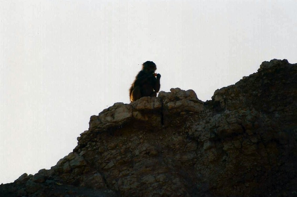 monkey 003 image