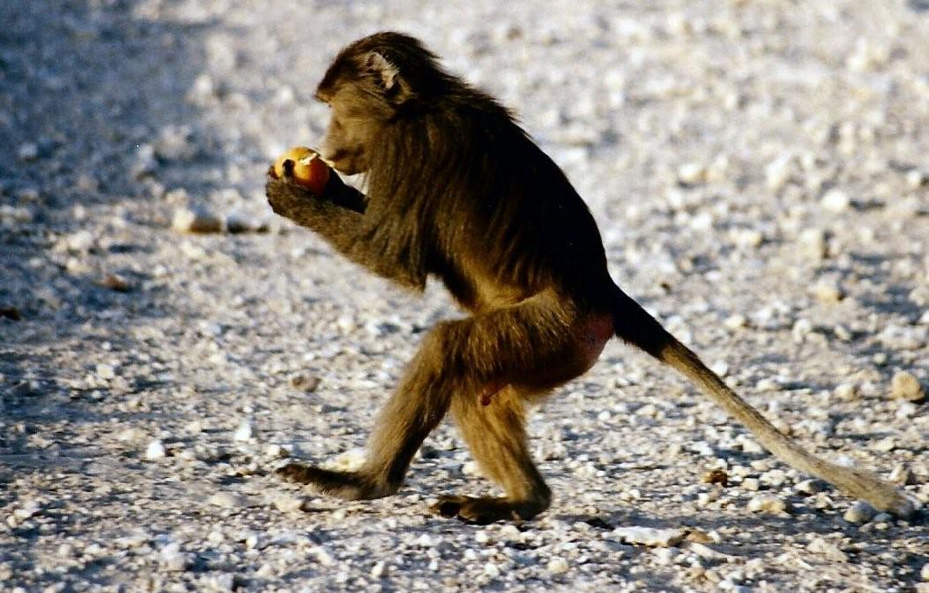 monkey 004 image