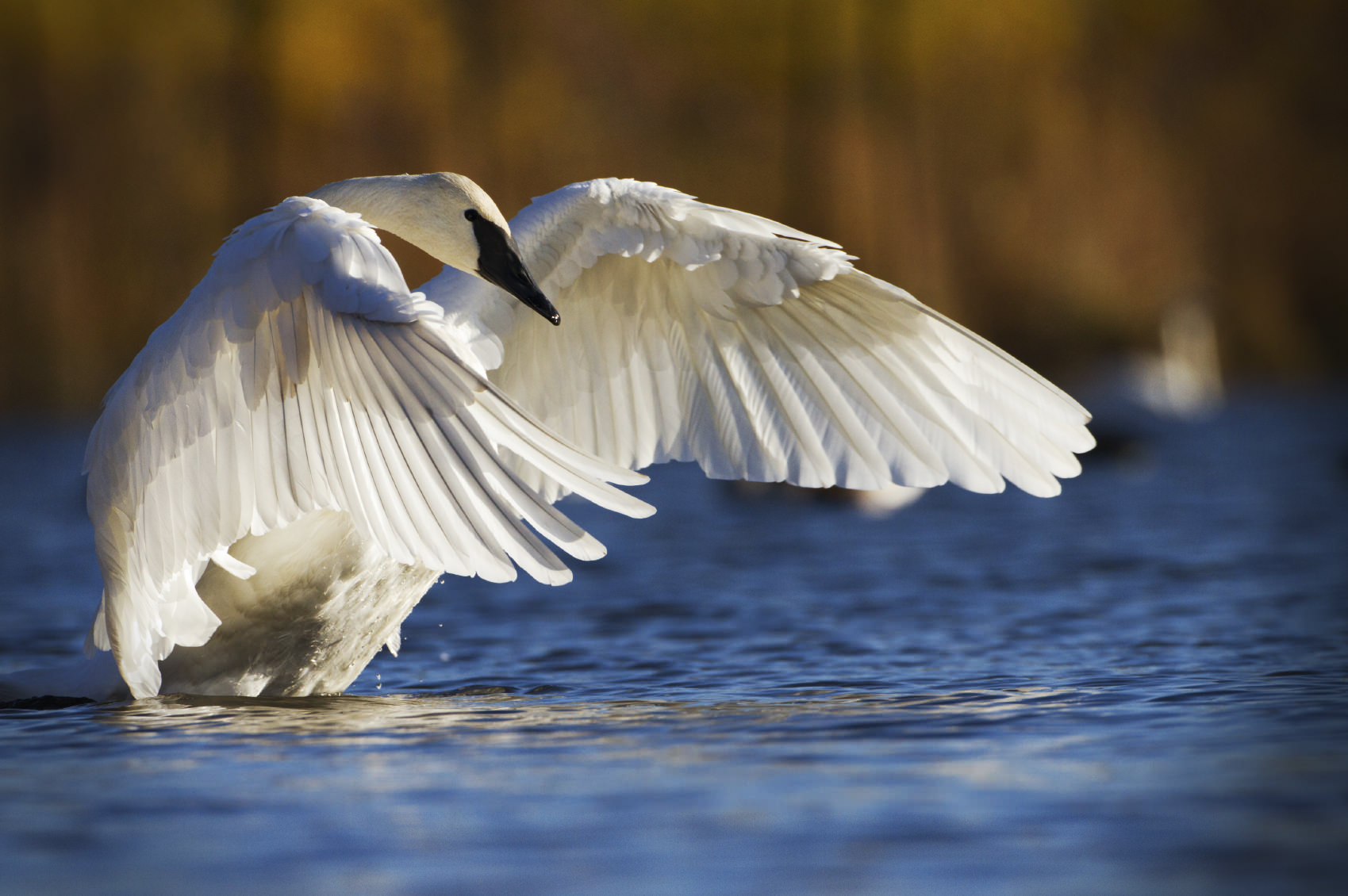 how to take bird photography