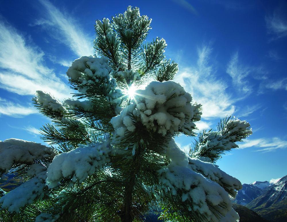 natures christmas tree 1000 image