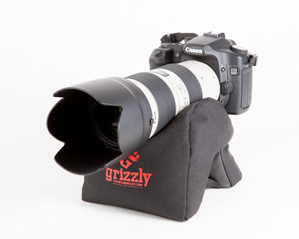 grizzly image