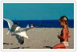 beacho0803 image