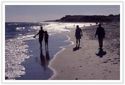 beachr0803 image