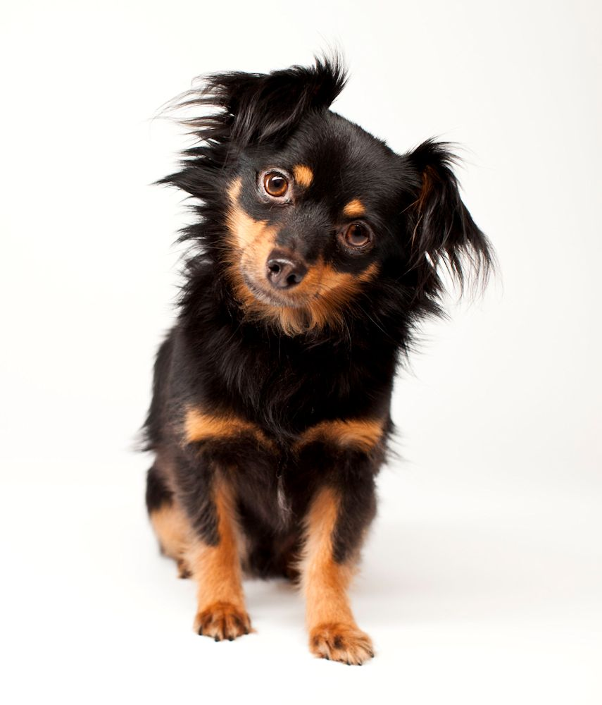 Pet Photo image