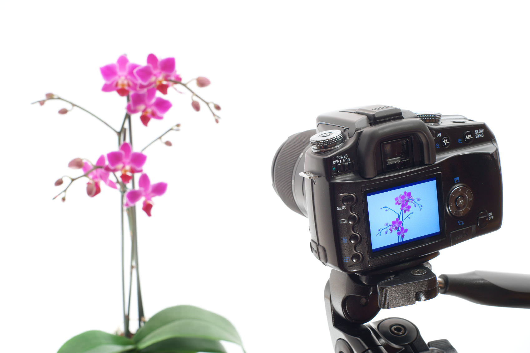 photographing an orchid image