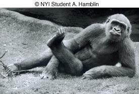 © NYIP Student A. Hamblin image