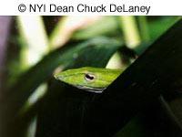 © NYIP Dean Chuck DeLaney image