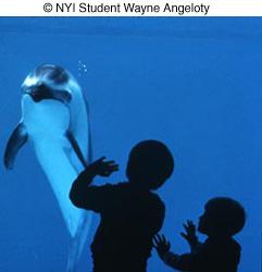© NYIP Student Wayne Angeloty image