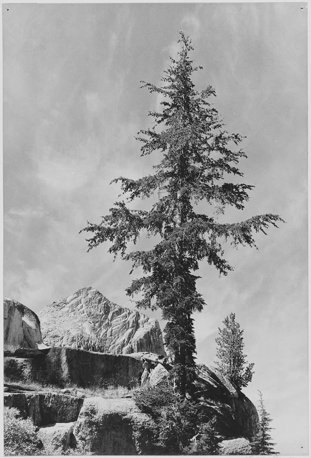 Ansel Adams National Archives 79 AA H08 min image