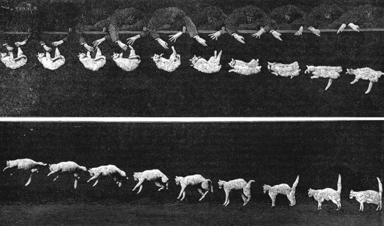Falling cat 1894 image