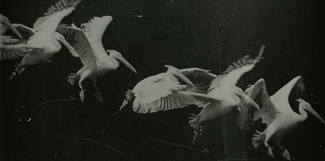 Marey birds image