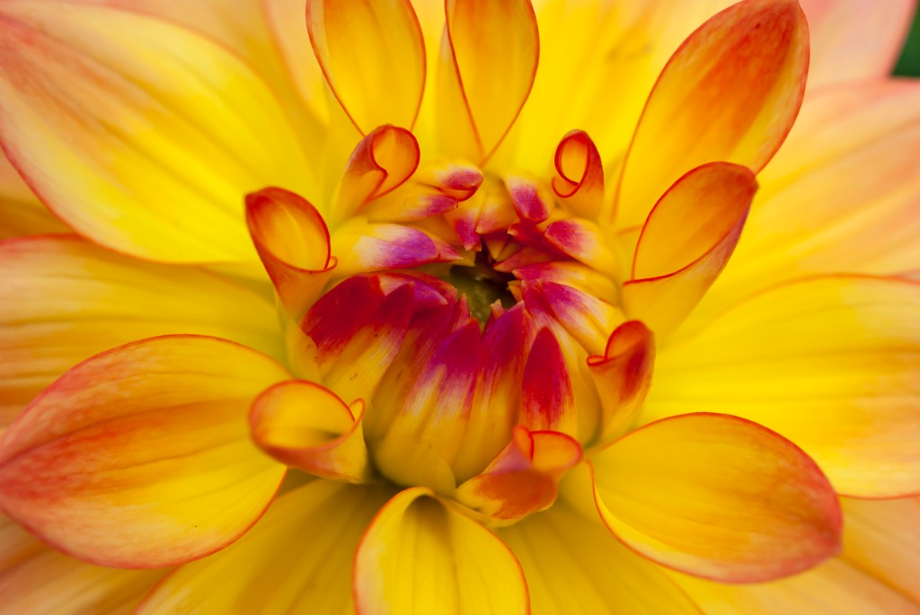 yellow flower in macro view picture id611308356 image