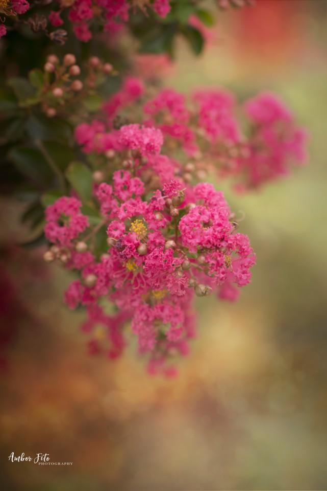 AFP Nature Floral Web007 image