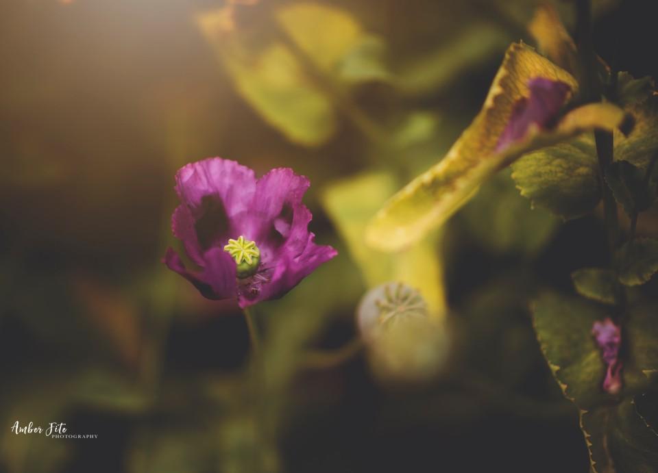 AFP Nature Floral Web066 image