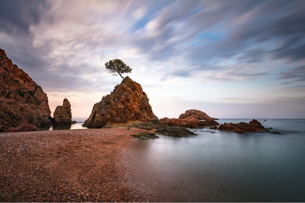 lonely tree on a rock picture id812090904 image