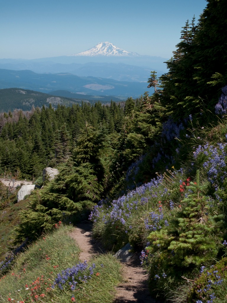 mt adams picture id171373944 image