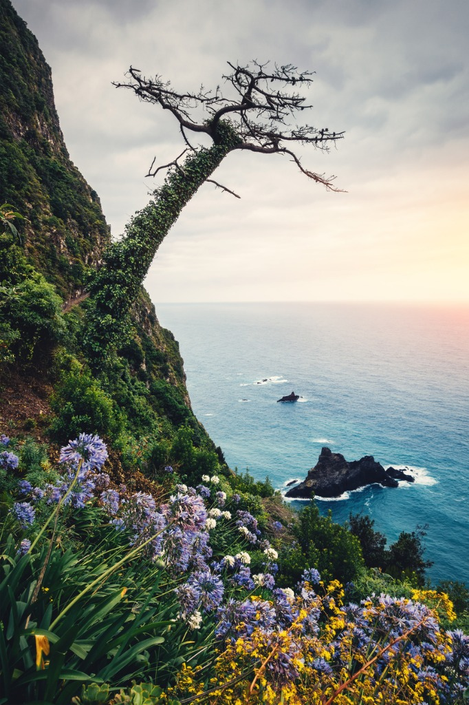 madeira island landscape picture id649751688 image