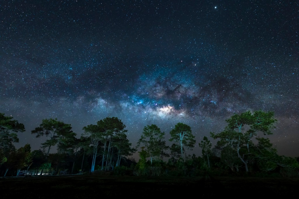 milky way over pine trees phu kradueng national park thailand picture id921732068