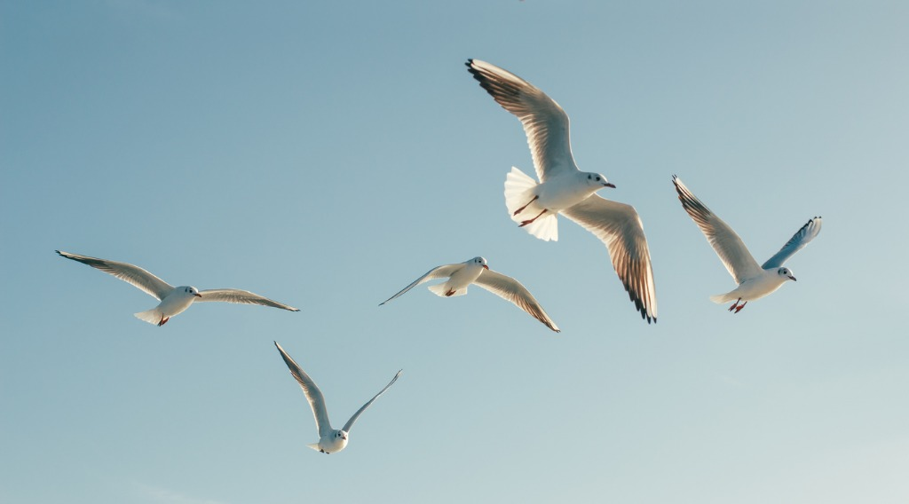 seagulls picture id534050814 image