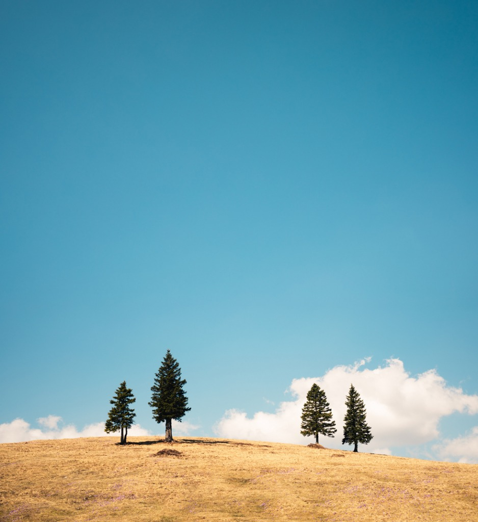 alpine meadow with pine trees picture id666693484 image