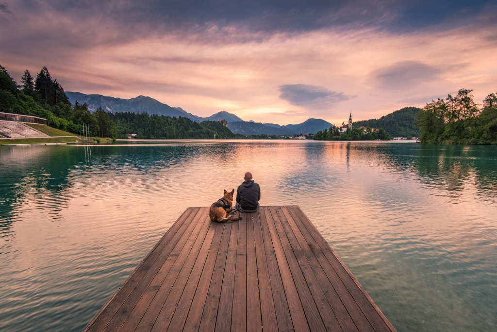 man and dog sitting on wooden deck at bled lake slovenia picture id811944228 image