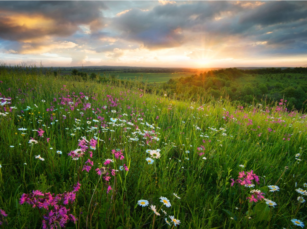 flowers on the mountain field during sunrise beautiful natural in picture id903873992 image