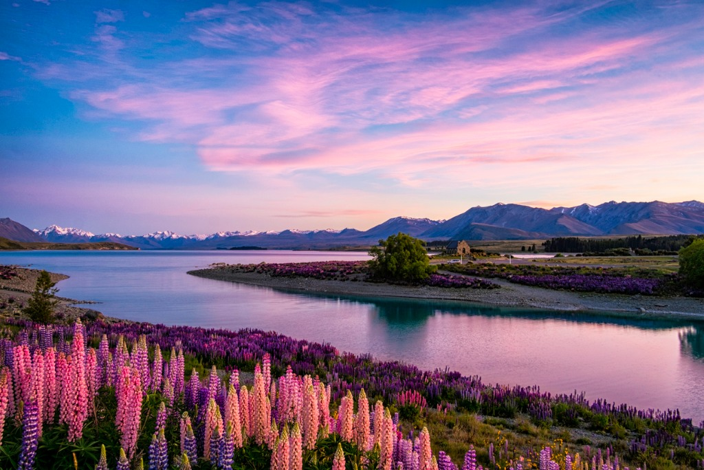 lake tekapo at dawn new zealand south island picture id860528958 image