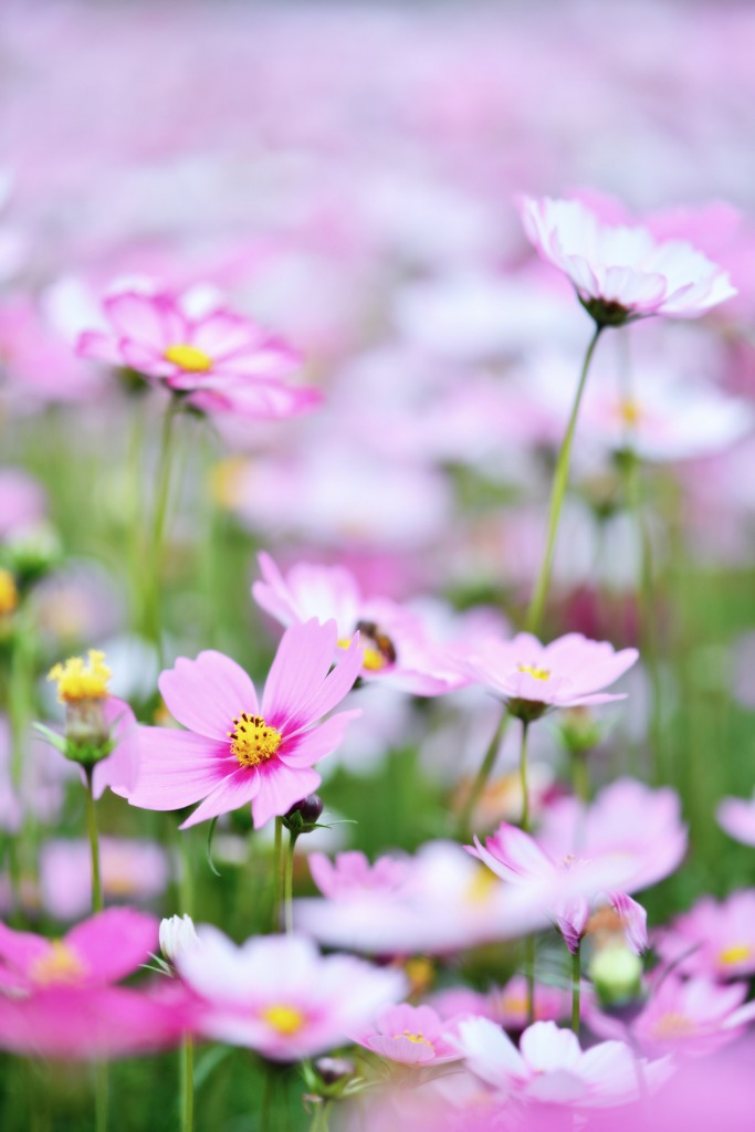 spring flowers picture id676053958 image