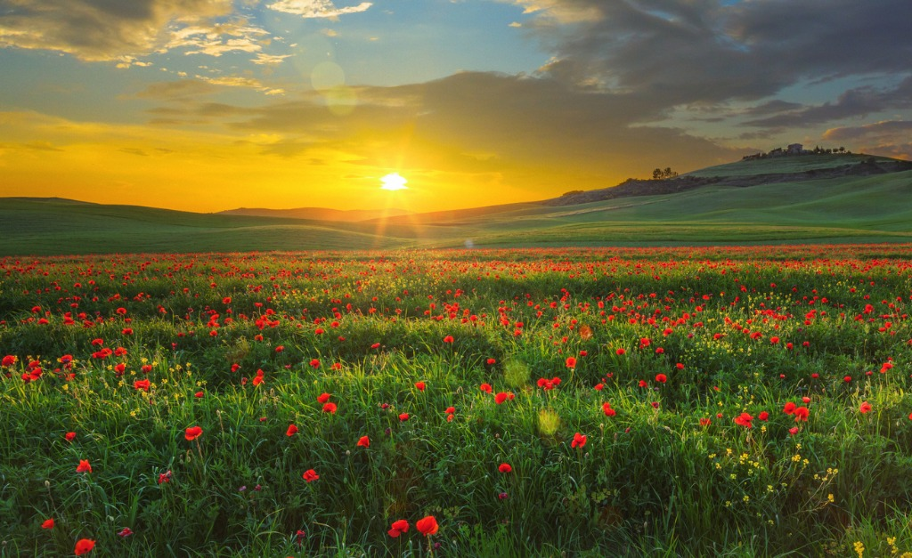 landscape with poppies in tuscany italy at sunset picture id665357004 image