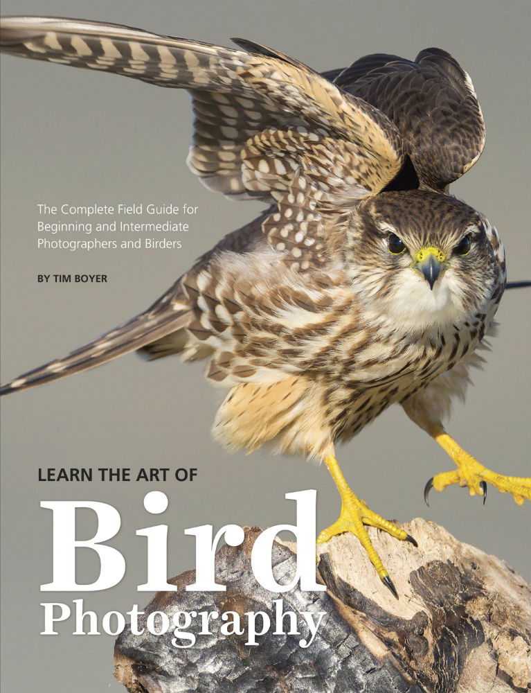 learn the art of bird photography front cover image
