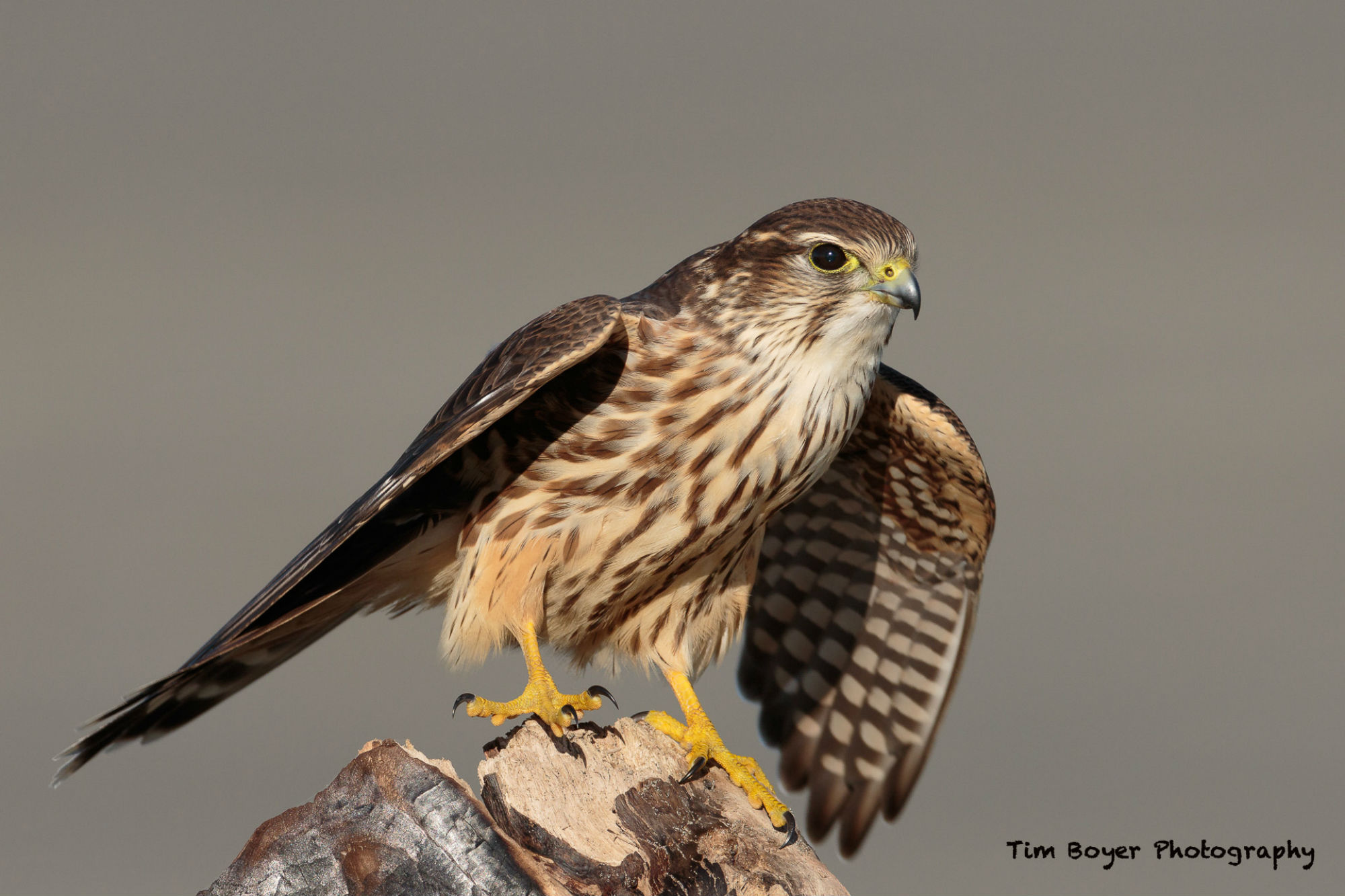 bird photography tips tim boyer image