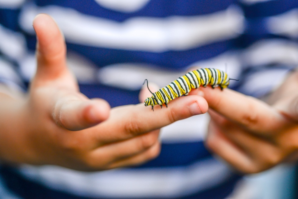 caterpillar kid picture id881285854 image