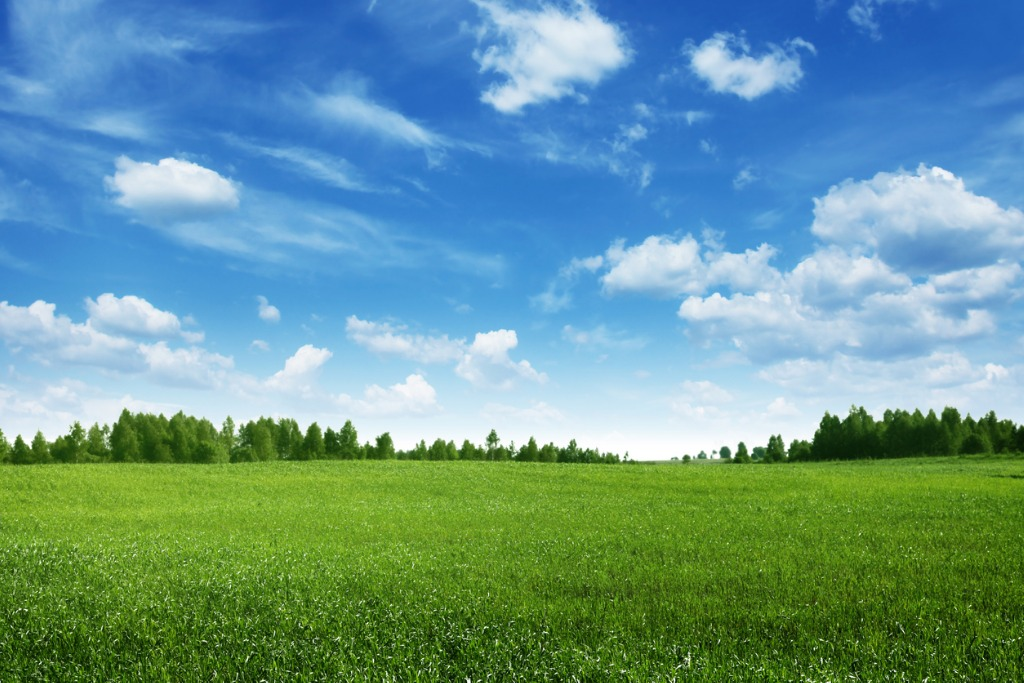 green field lined by trees on clear day picture id113145561 image