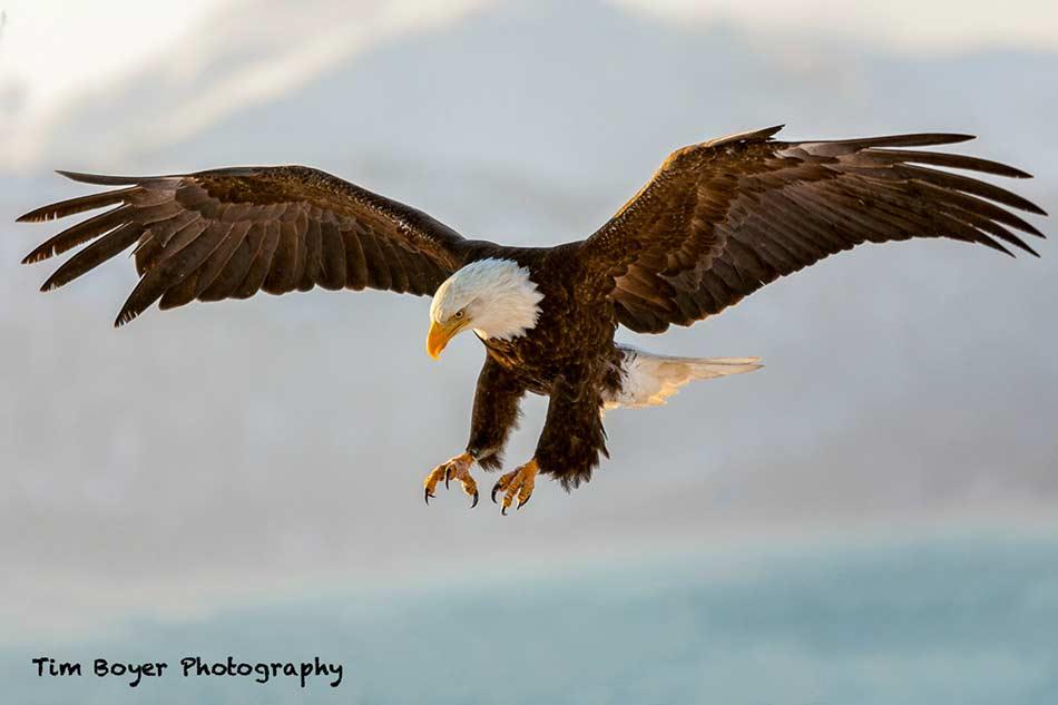 birds in flight photography tim boyer image