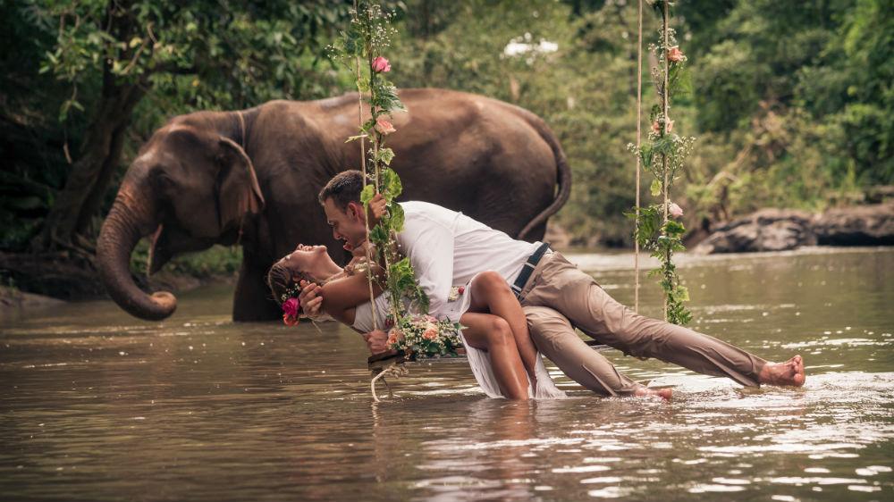 elephant photography image