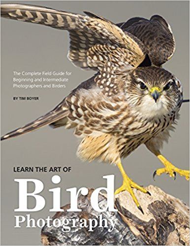learn the art of bird photography image