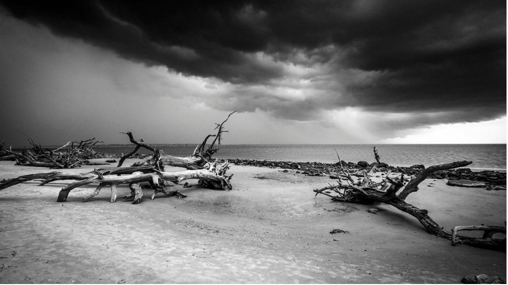 driftwood beach jekyll island georgia picture id826737784 1 image