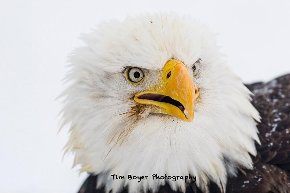 how to take sharp photos of birds image