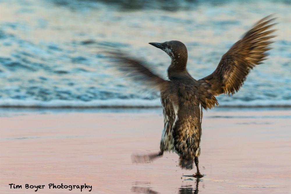 bird photography technique image