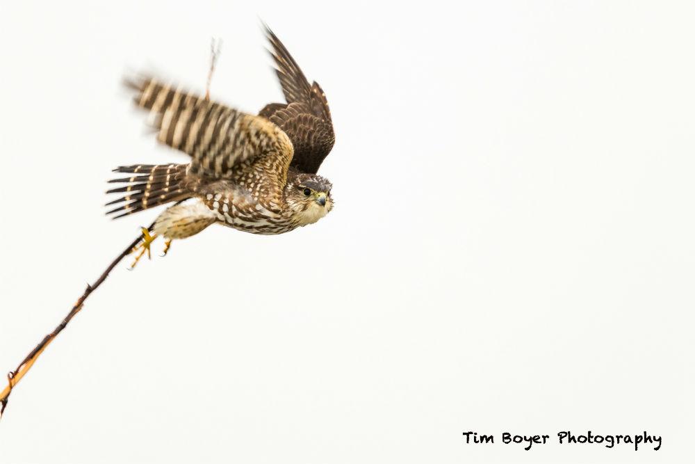 bird photography tips and tricks image