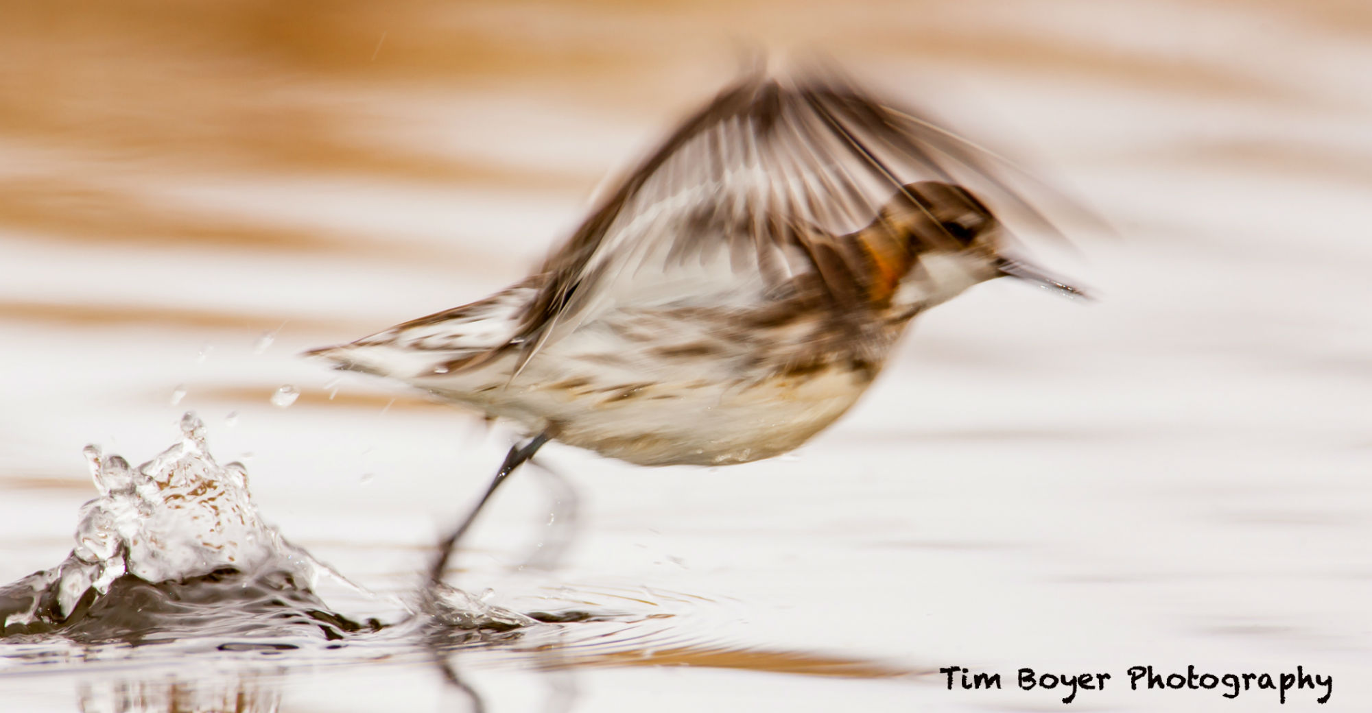 Use a Slower Shutter Speed for the Illusion of Motion in Bird Photography